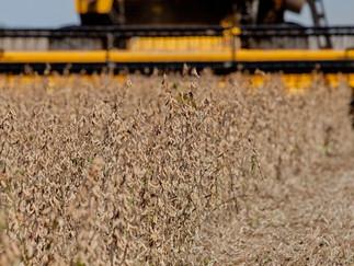 Redução de área plantada muda cenário de oferta para soja americana