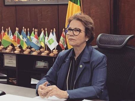 Ministra da Agricultura diz que Brasil vai zerar a tarifa do arroz importado