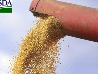 USDA mantém estoques finais de soja e reduz estoques de milho da safra velha os EUA