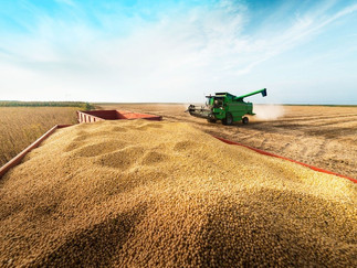 Importação de soja do Brasil pela China cai em janeiro e fevereiro por atraso em cargas