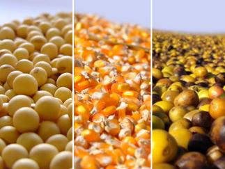 Soja, milho e café têm valorização seguindo movimento do câmbio; veja as notícias desta segunda