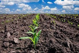 USDA aponta bom avanço do plantio de soja e milho nos EUA, mas dentro das expectativas