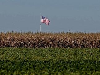 USDA informa plantio da soja em 3% da área, em linha com expectativas