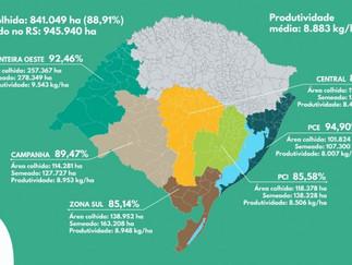 Colheita do arroz no Estado alcança 89%
