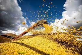 Soja supera os US$ 15 por bushel no contrato maio/21 ainda com força do óleo e clima nos EUA