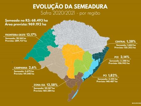Arroz: Produtores do RS já semearam 7% da área prevista