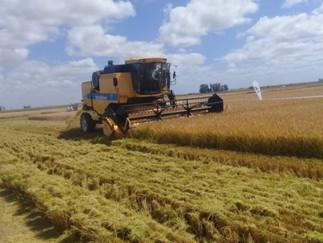 Uruguai plantou mais de 143 mil hectares
