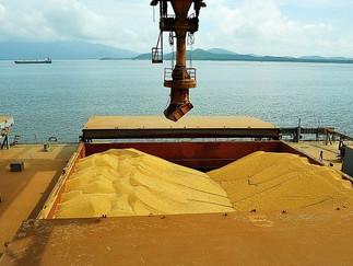 Brasil pode exportar menos soja em maio deste ano, ante 2020, diz Anec