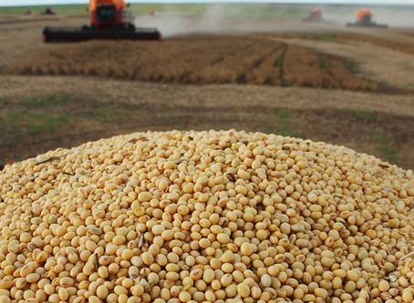 Governo estuda zerar tarifa de importação da soja