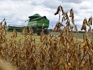 Soja: colheita chega a 78% da área e iguala ritmo dos últimos cinco anos