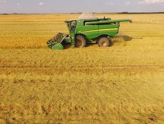 Preço firme e produtividade alta animam produtores gaúchos de arroz