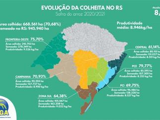 Semana registra 70% da área colhida no RS