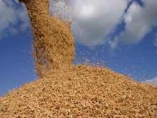 Arroz: Brasil importa 4,172 mil t até terceira semana de março