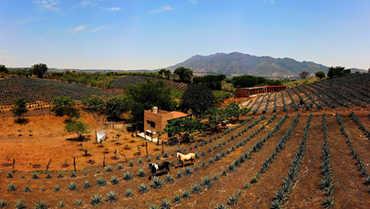 Tequila Farm