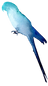 Bird Silhouette 5.png