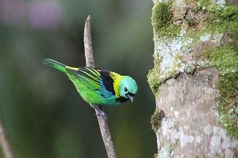 Casa da Aventura Paraty Birdwatching
