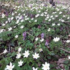 printemps (1).jpg