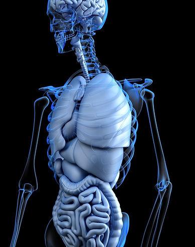 anatomical-2261006_1920_edited.jpg