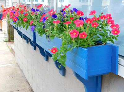 bright blue flower boxes