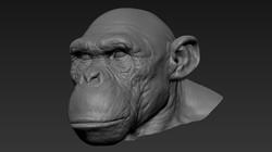 chimp_wip_06