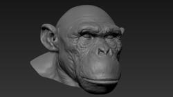 chimp_wip_07