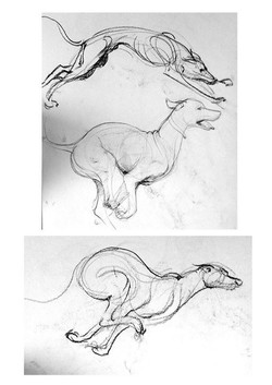 Some animal studies from lunch-time art gatherings at the studio