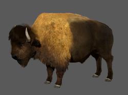 bison_render_2
