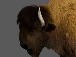bison_head