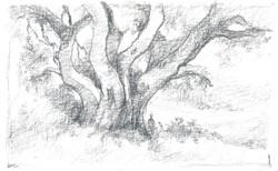 drawing68