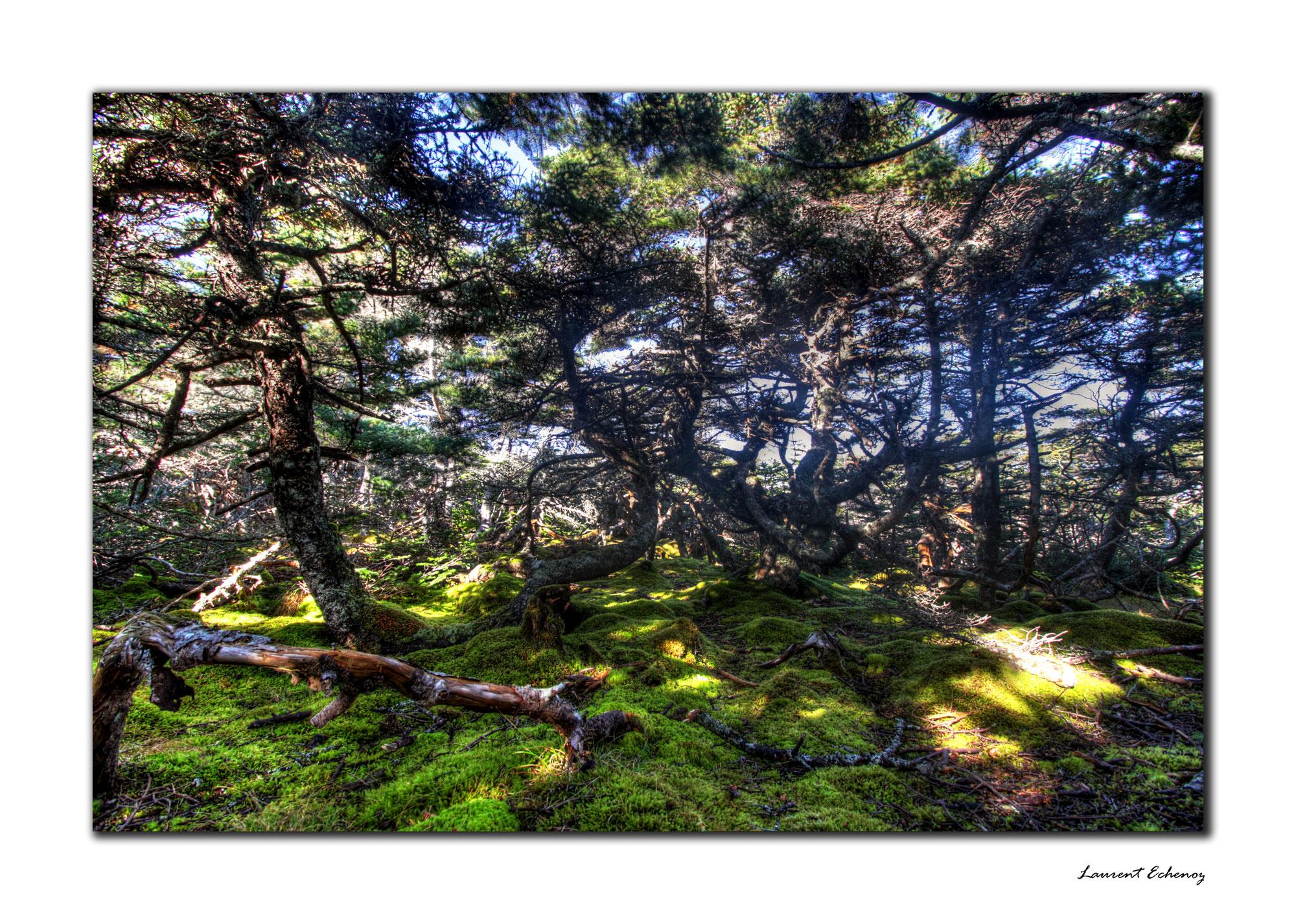 La forêt boréal enchantée