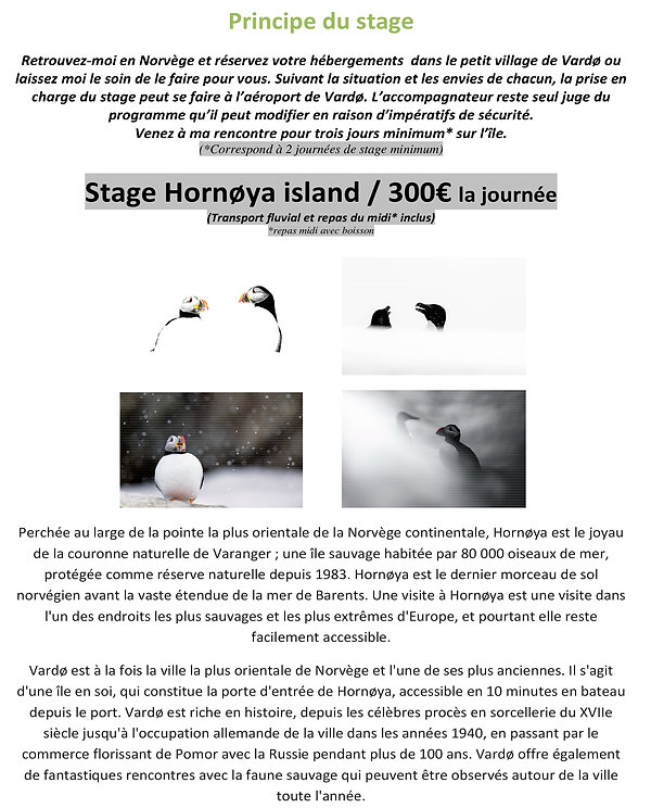 Hornoya island - Le paradis blanc du macareux moine - NORVEGE-3.jpg