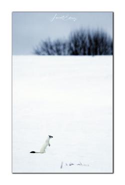 En l'orèe de blanche