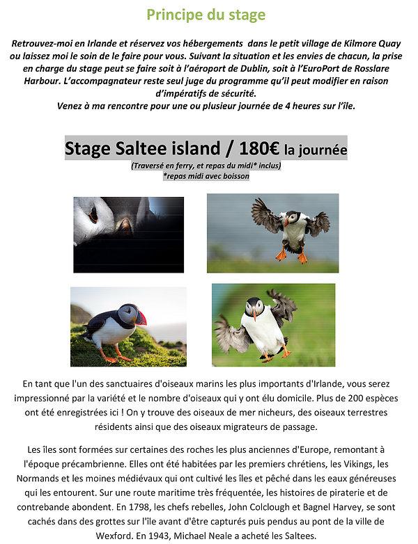 Saltee island - Une balade irlandaise - IRLANDE-3.jpg