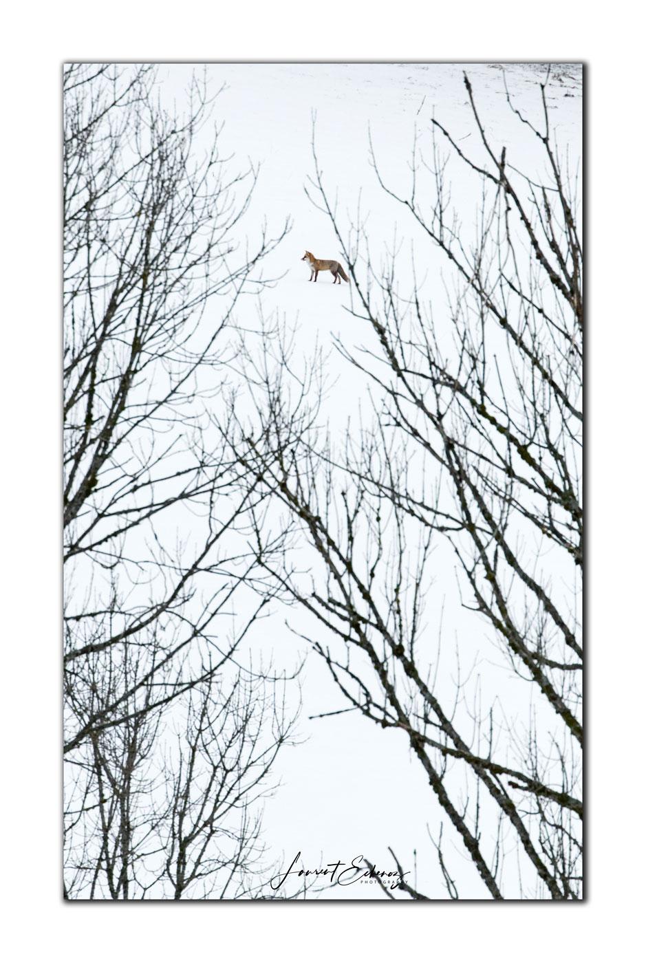 Et entre les branches