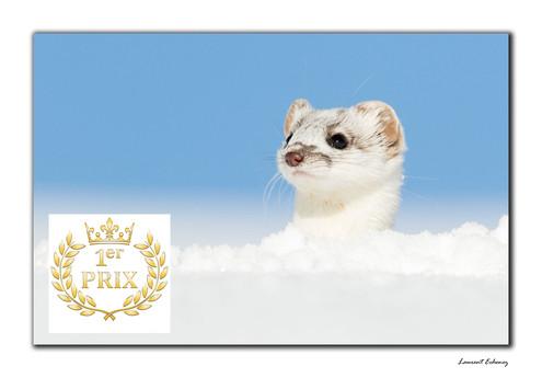 Récompenses - 1er PRIX DU PUBLIC                  Rendez-vous Images Plaine Nature 2019
