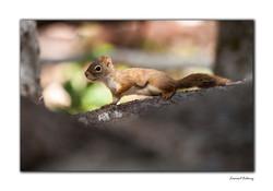 Lumière sur écureuil