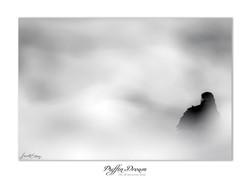 Puffin dream - 63