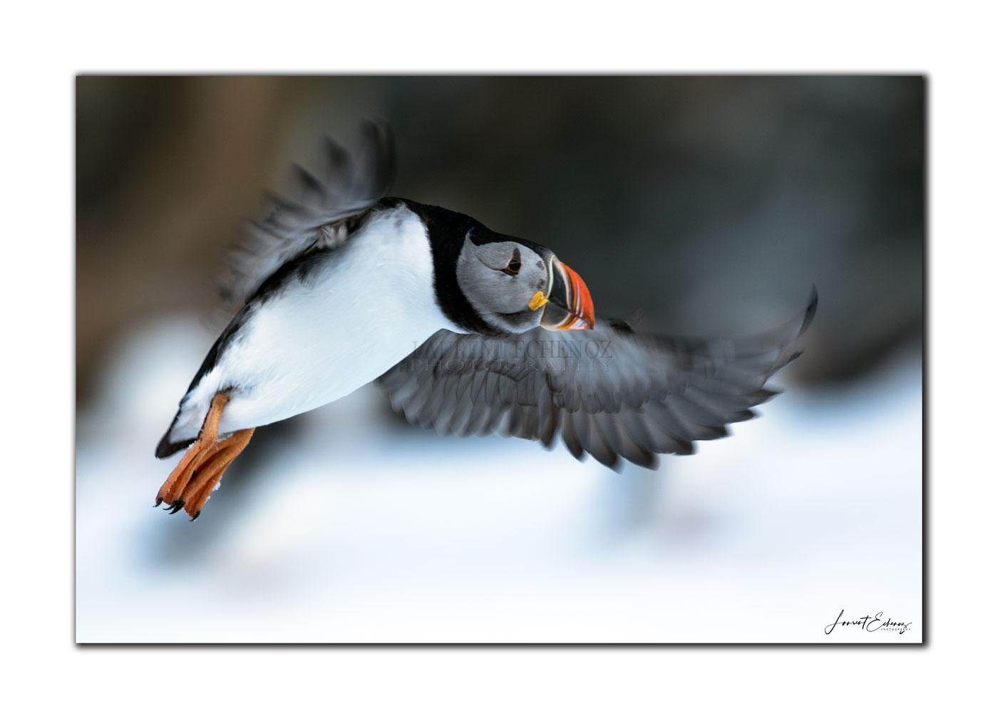Vol au dessus de la neige