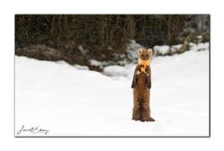 Demoiselle sous la neige