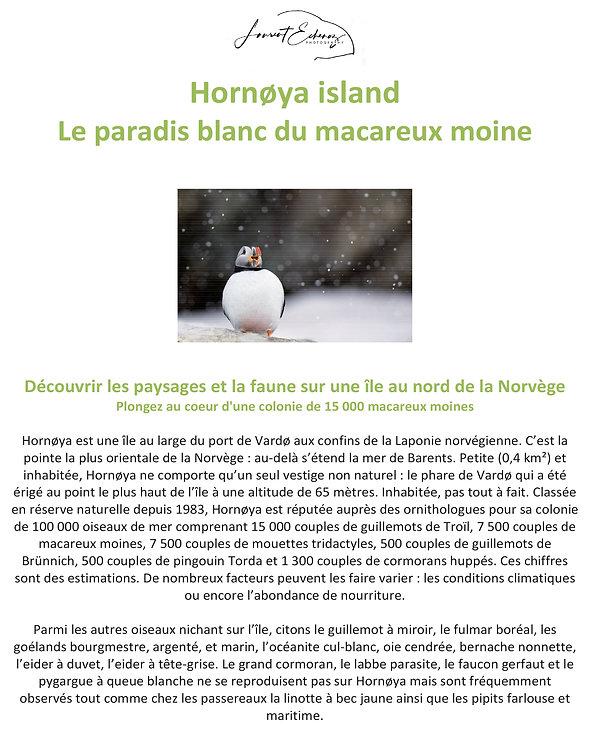 Hornoya island - Le paradis blanc du macareux moine - NORVEGE-1.jpg