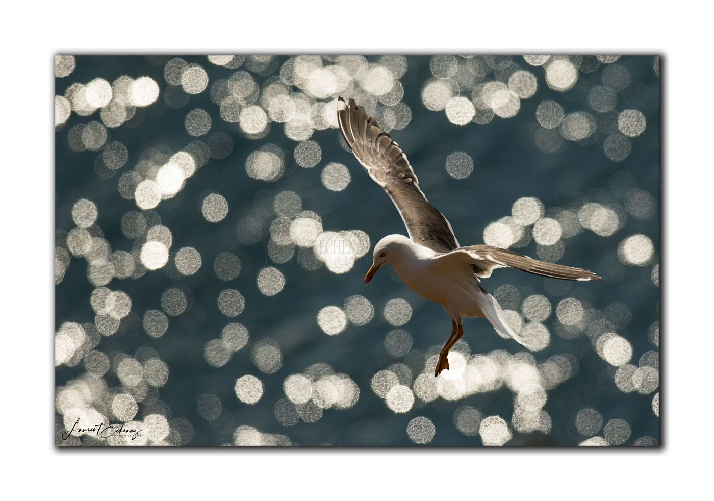 Mouette fly