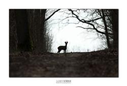Dans l'ombre du chemin