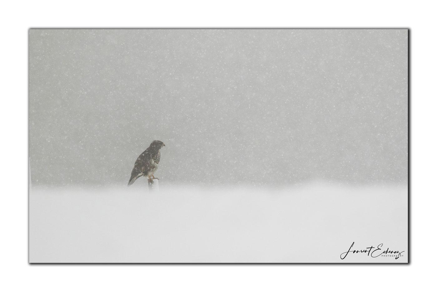 La belle sous la neige