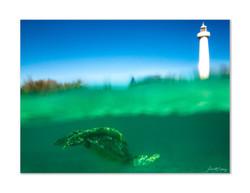 La tortue du phare