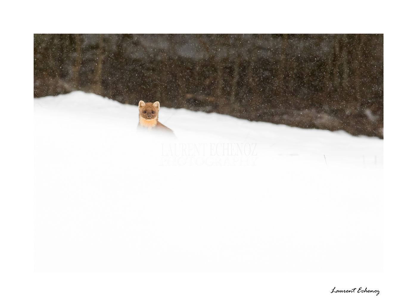 Demoiselle dans la neige