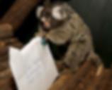 Silkeapen Harald sjekker posten i forbindelse med navnekonkurransen som ga ha akkurat navnet Harald