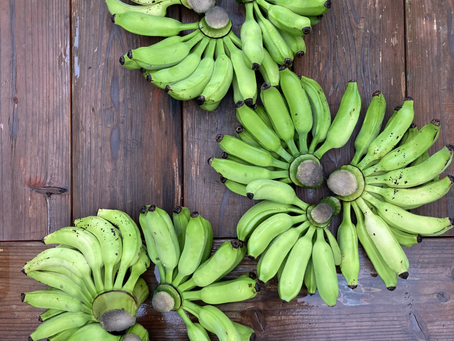 バナナを収穫