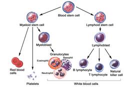 BloodComponents