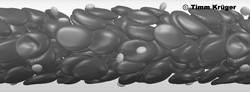 rbc+platelets_gray_edited