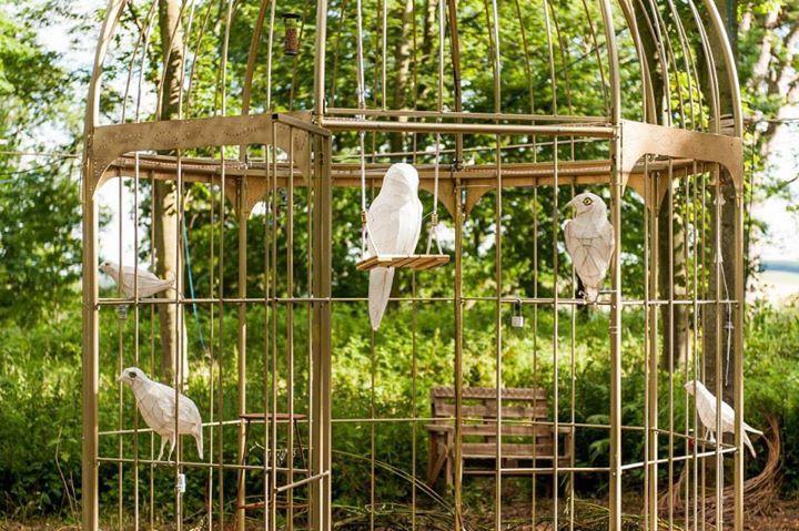 Birdys in the sunshine
